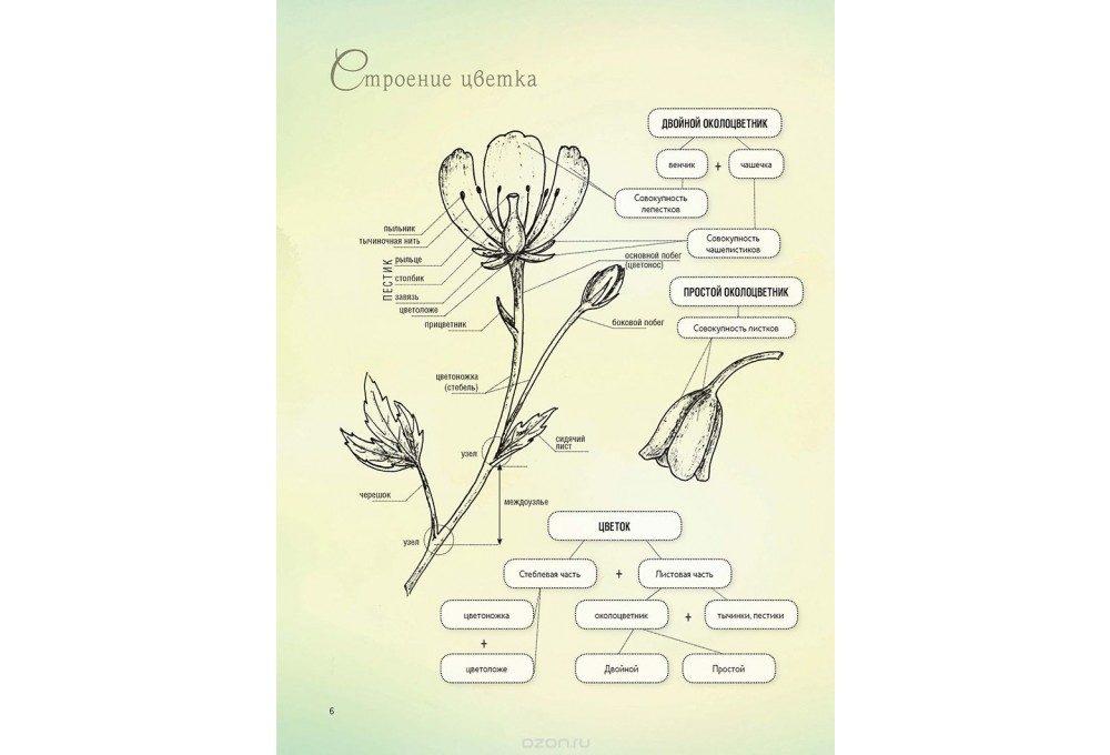 разбор цветка от королевой елены