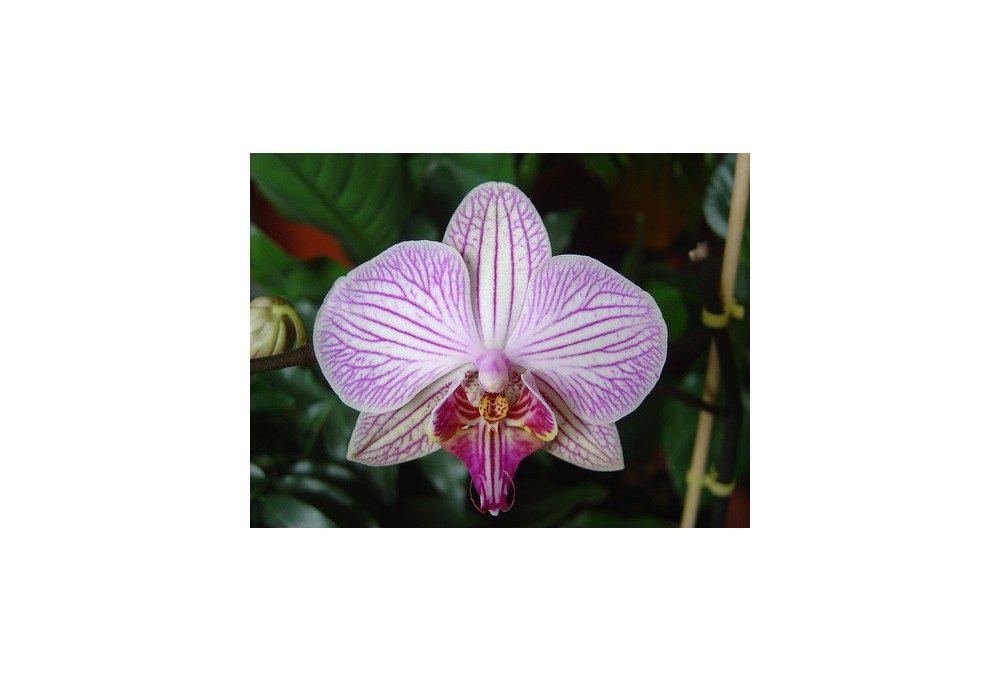 орхидея текстурная